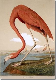 Flamingo[1]